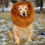 [B00O2842UU] かわいいペットがライオンに変身!立派なタテガミで周りも驚く 愛犬 愛猫 コスプレ グッズ TPE-03 (愛犬用 LL)