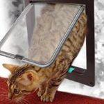 [B00SPL4M2I] ペット用 出入口 ドア 扉 犬 猫 ペット ゲート 4WAY 色 サイズ 選択 可 (ブラウン(茶), L (23×25×5.5 cm))