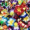 [B00SQ2BNVO] プルメリア お花 の ビーズ つめあわせ 樹脂 粘土 製 (20mm:200個)