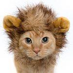 [B01AAAPZHW] SOMAN ペット用 ライオンコスプレキャップ ライオンのたてがみ(耳付き) おしゃれ ペット 着ぐるみ 帽子