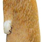 [B016Y55AAO] アルタ パッケージスイート マグネット 壁ごこち 柴犬 AR0810075