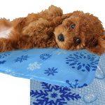 [B0114P60V2] 冷却マット クールマット ペット 小型犬 熱中症対策 防カビ 抗菌 水洗い Mサイズ クール PC 冷たい ジェル ペット 犬 いぬ 猫 夏 暑さ対策